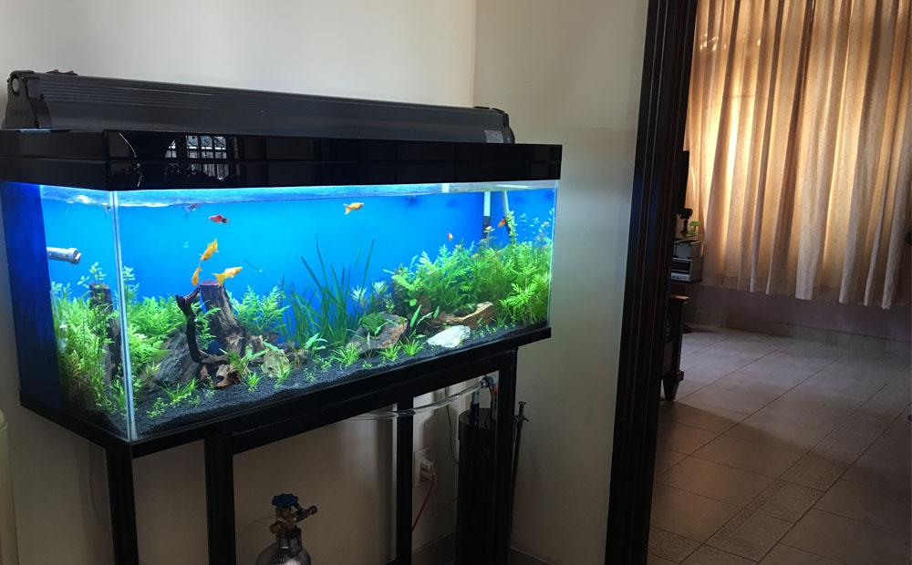 bể cá hơp phong thủy