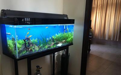 Cách đặt bể cá trong phòng khách hợp phong thủy